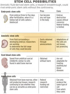 STEM CELL 10