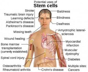 STEM CELL 11