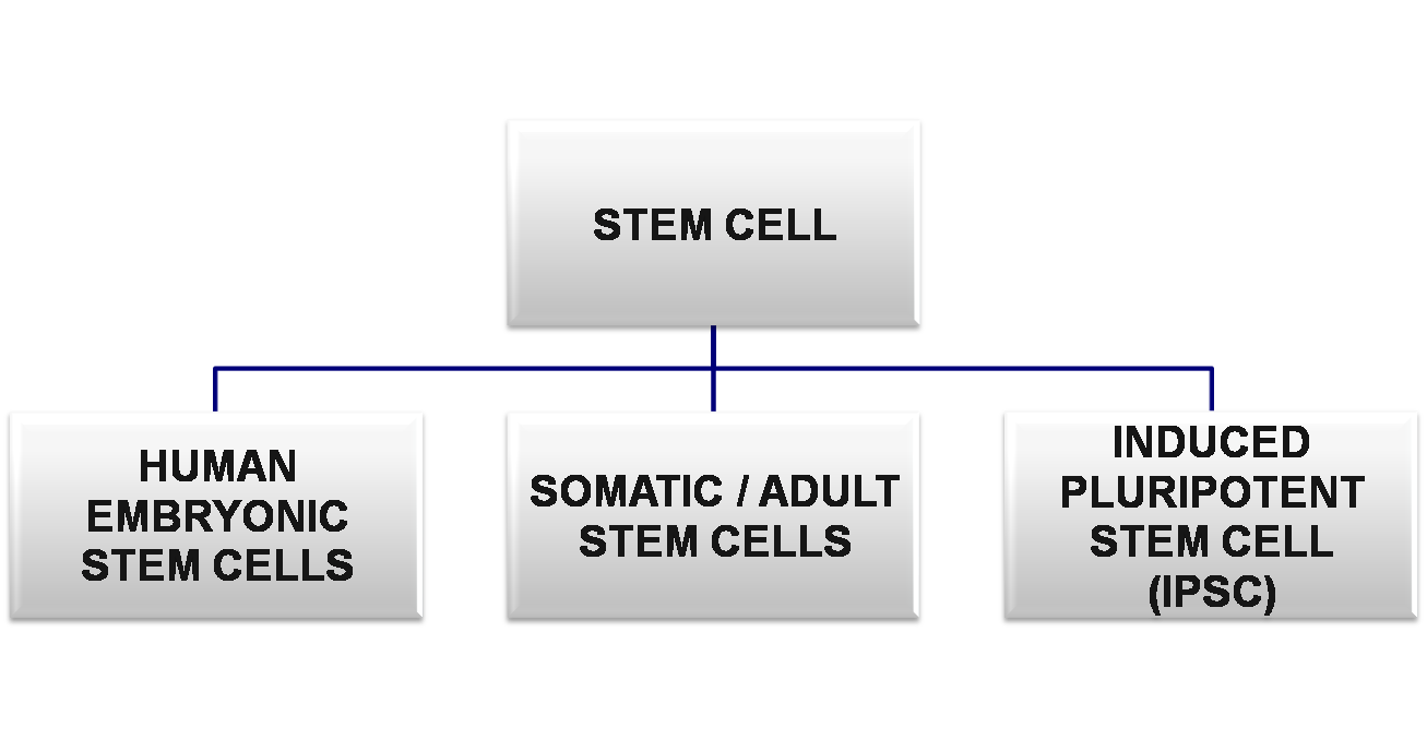 Stem Cell Therapy Infofru